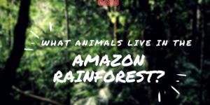 What Animals Live In The Amazon Rainforest?